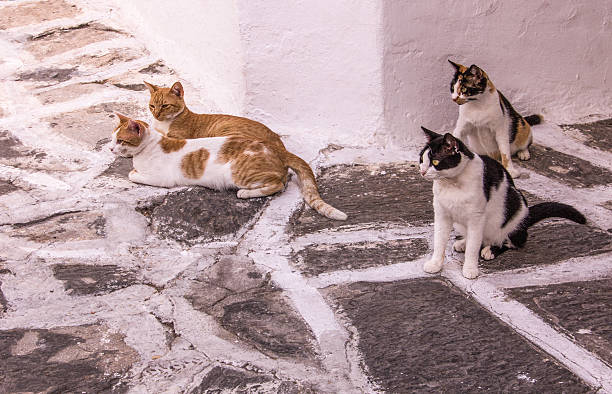 Group of Cats Greece stock photo