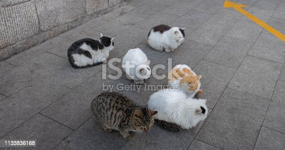 824824466 istock photo A group of cats on the floor. They sleeping on the floor at the great wall , 1133836168