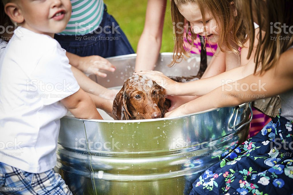Group of children giving a brown puppy a bath royalty-free stock photo
