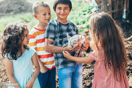 Group of Loving children with baby piglet in the farm