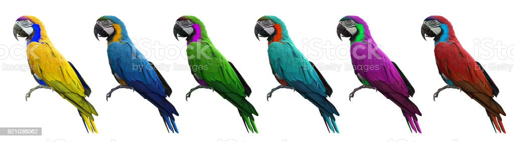 Group of colorful macaws bird isolated on white background with clipping path. stock photo