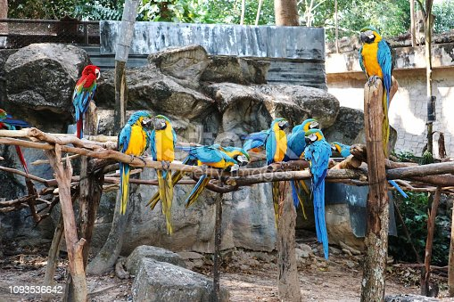 Group of Colorful Macaws