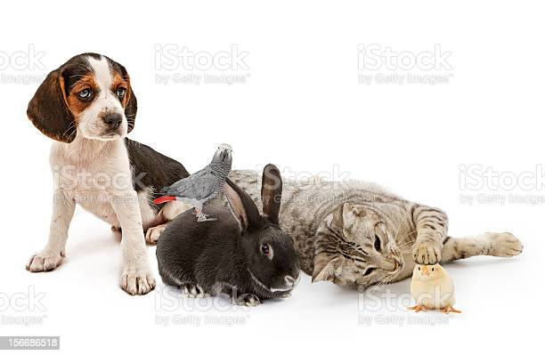 Group of common household pets picture id156686518?b=1&k=6&m=156686518&s=612x612&h=zuhm4eljndvatthzcowew9cd5jj0evewyn5whuqz7xo=