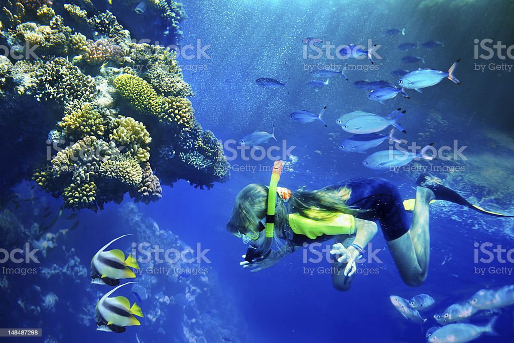 Group of coral fish in  blue water. stock photo