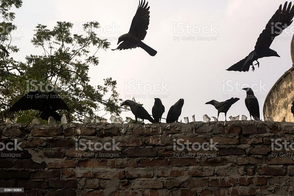 Group of crows on wall. stock photo