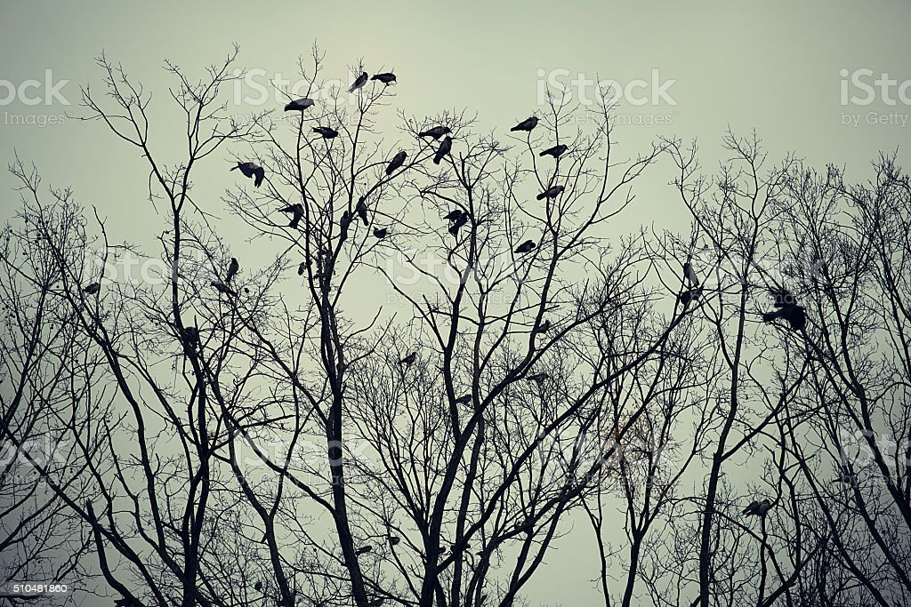 Group of crows sitting on a tree stock photo