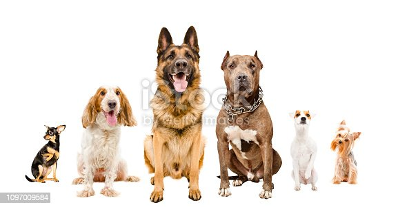 Group of cute dogs sitting together isolated on white background