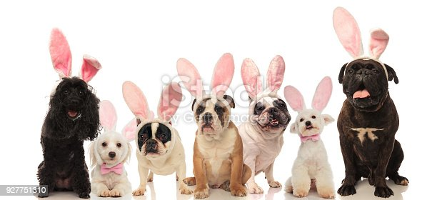 istock group of cute dogs wearing easter bunny ears 927751310
