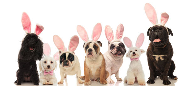 Group of cute dogs wearing easter bunny ears picture id927751310?b=1&k=6&m=927751310&s=612x612&w=0&h=wgmlcgm7cqdtubtsarsv8vux4omwiymct 4gtr80vgi=