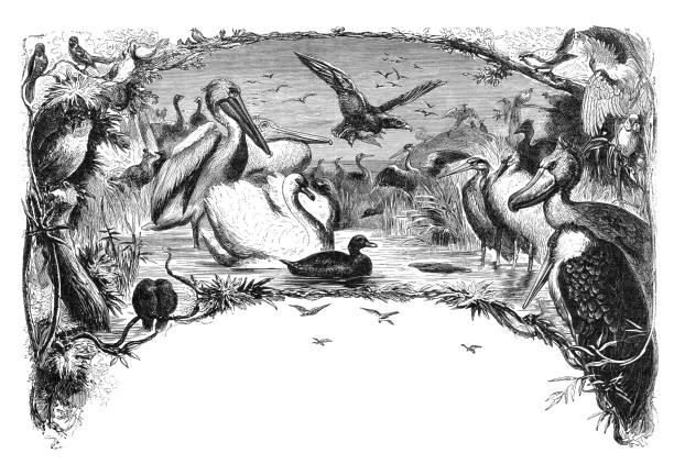 group of different birds engraving 1880 - acquaforte foto e immagini stock