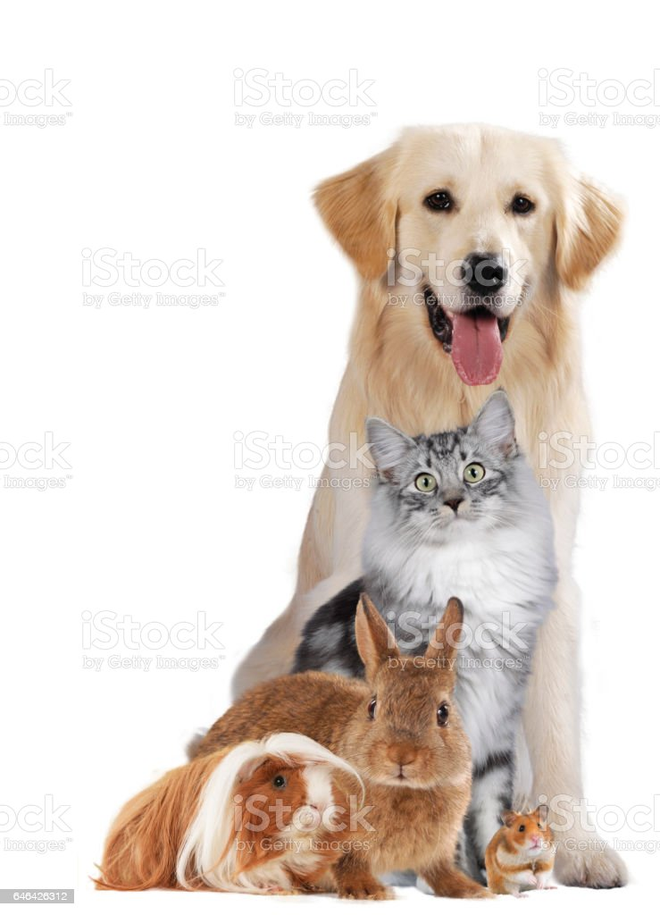 Group of different pets stock photo