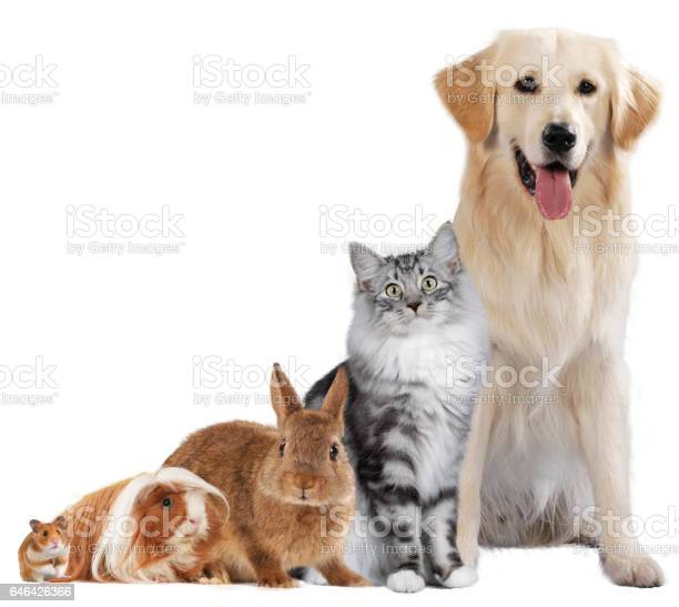 Group of different pets picture id646426366?b=1&k=6&m=646426366&s=612x612&h=7ovnn2x7os5uuthhmfis majkyl0siirnwrenkdiwps=