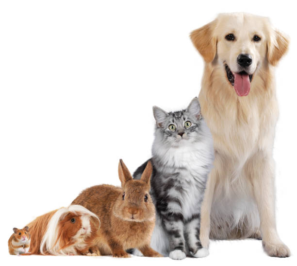 group of different pets - rabbit animal stock photos and pictures