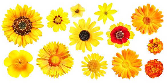 Selection of a photo series with color-assorted garden flowers seen from above, isolated.