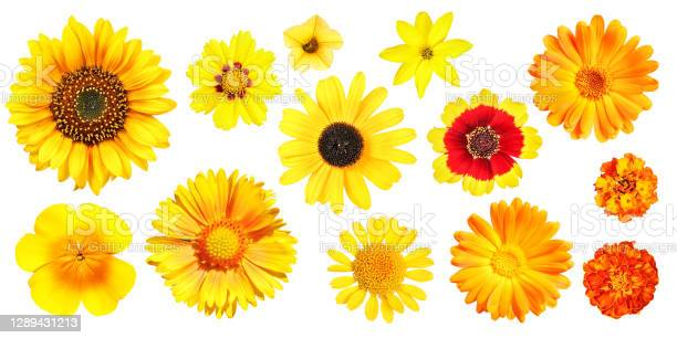 Photo of Group of different yellow and orange garden flowers, isolated