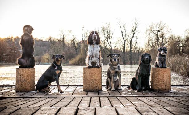 köpek birlikte ourdoor oturma grubu - safkan köpek stok fotoğraflar ve resimler