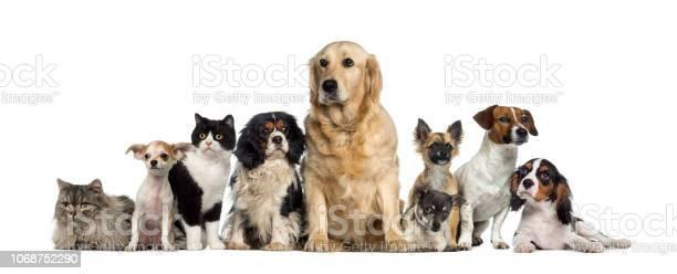 Group of dogs and a cat picture id1068752290?b=1&k=6&m=1068752290&s=612x612&h=rhkyijqeshzzev7ebtogsepjgjhooyeirn lb0s wgg=