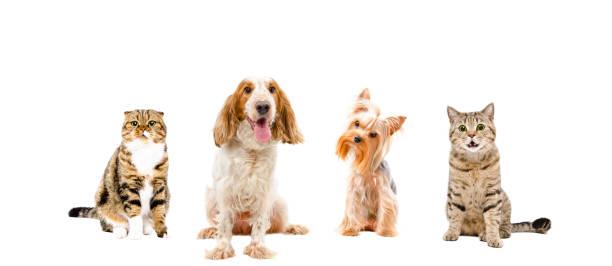 Group of dogs and cats picture id1154370587?b=1&k=6&m=1154370587&s=612x612&w=0&h=gojx2a1iel zz7ls9kc3p23fcfurj9pms1r5vxxba24=