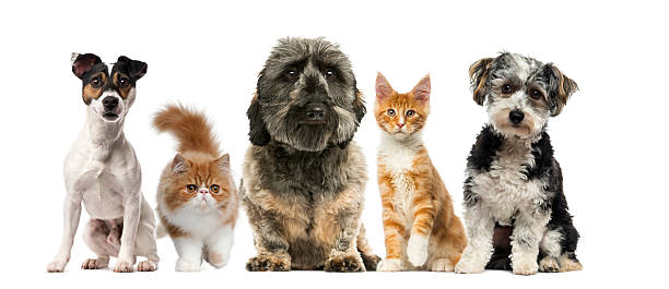 cats excellent house pets and companions The five best pets for companionship but most cats are friendly and get along well with other pets and children in the household cats making them excellent.