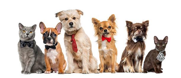Group of dogs and cats picture id508292854?b=1&k=6&m=508292854&s=612x612&w=0&h=pv9zkm34rd2um6dg t nb ol92exf6pkspqhqdwepa8=