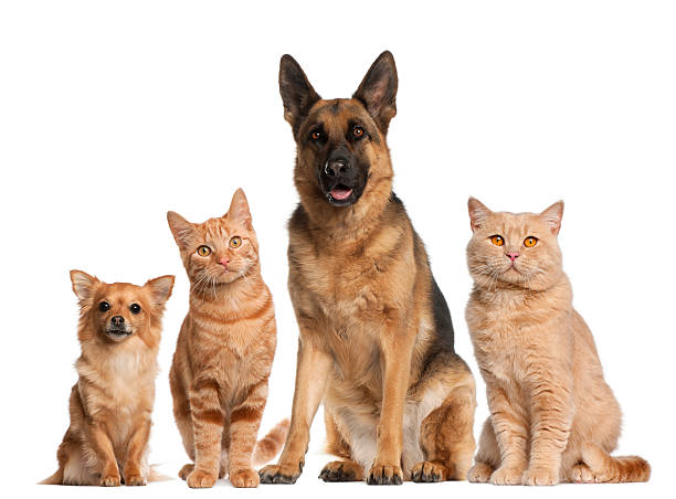 Group of dogs and cats sitting white background picture id483875229?b=1&k=6&m=483875229&s=612x612&w=0&h=tl7amoxg70ddnfdfvsbe7o3wfnluxhxjnw 9zzgsm94=