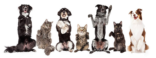 Group of Dogs and Cats Together Begging stock photo
