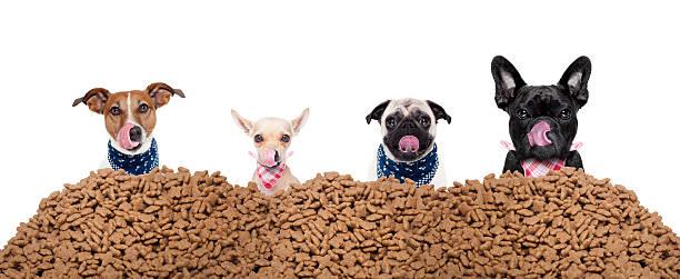 grupo de cães por trás monte de alimentos - dog food imagens e fotografias de stock