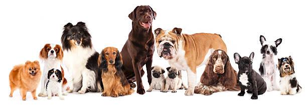 gruppe von hunden - chinesische schopfhunde stock-fotos und bilder