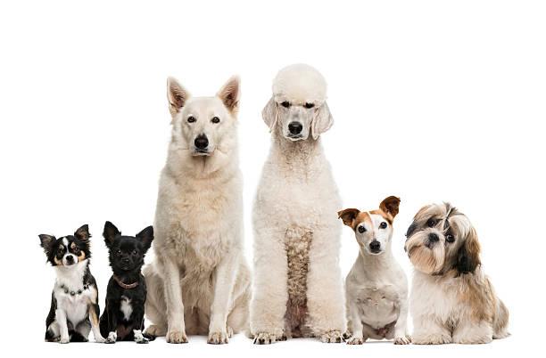 Group of dogs picture id483663622?b=1&k=6&m=483663622&s=612x612&w=0&h=9 8pdko0xykbbka84anb ho8ryukbtyesrc7uszqydo=