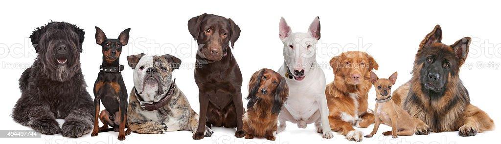 Groupe de chiens - Photo