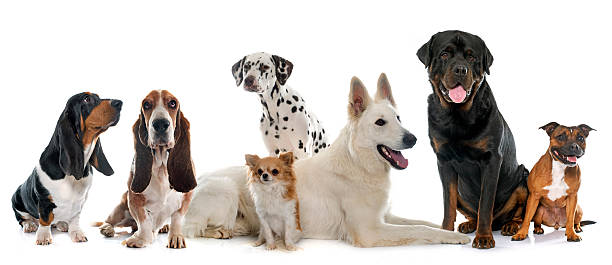 group of dogs group of dogs in front of white background number 7 stock pictures, royalty-free photos & images