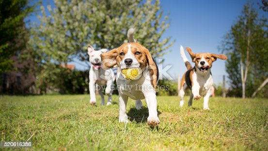 istock Group of dogs playing in the park 520616386