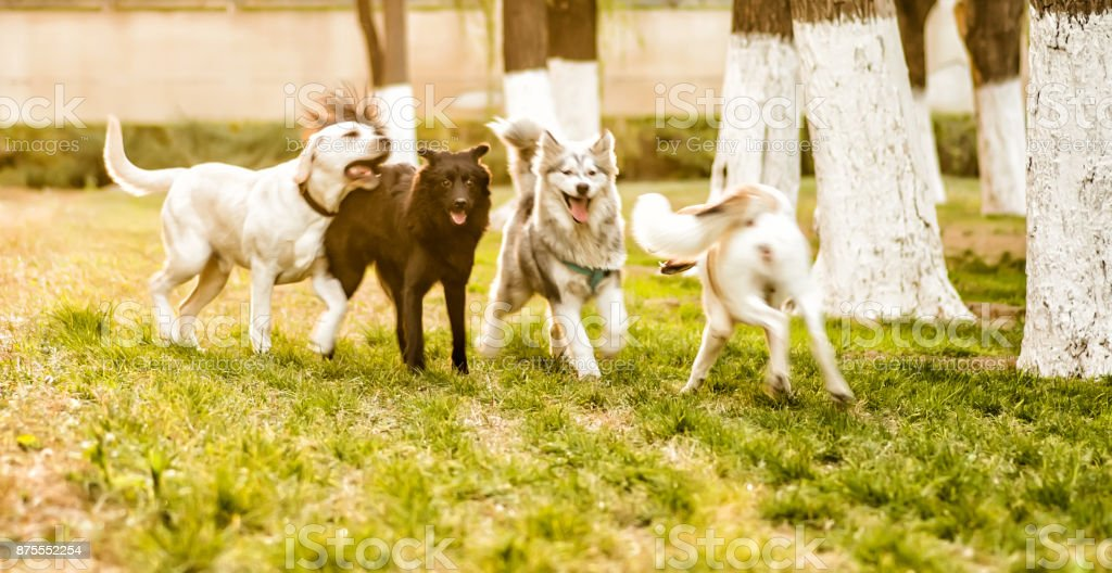 group of dogs playing outside in the park stock photo