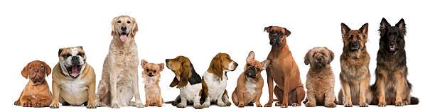 Group of dogs sitting against white background picture id482784325?b=1&k=6&m=482784325&s=612x612&w=0&h=e67lyhfeyflqn956a1eqoyw ymkti sl elpem24ncc=