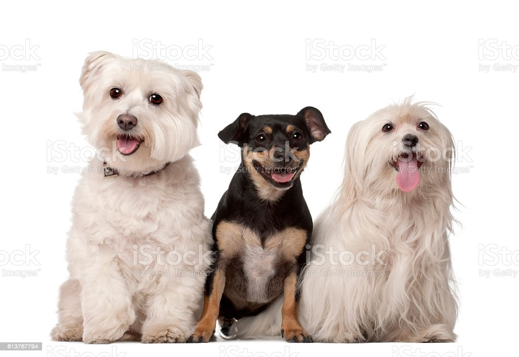 Group of dogs sitting in a row stock photo