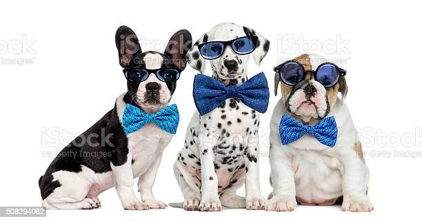Group of dogs wearing glasses and bow ties picture id508294062?b=1&k=6&m=508294062&s=612x612&h=6krogzoryveadb0vhi xyormgyvzzzjhgnogvrvd2qq=