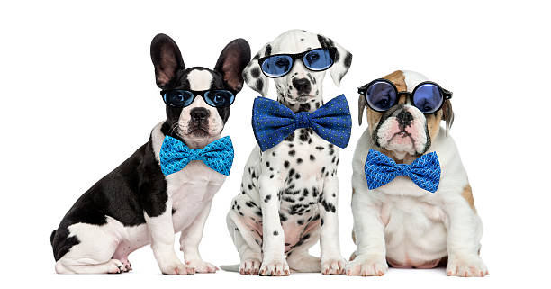 Group of dogs wearing glasses and bow ties picture id508294062?b=1&k=6&m=508294062&s=612x612&w=0&h=bbwtm1i7ojsvh8outz46uxtolokb9 matgun64c9mn4=
