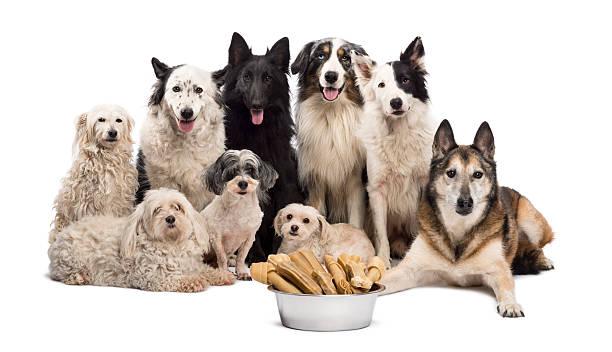 Group of dogs with a bowl full picture id158682099?b=1&k=6&m=158682099&s=612x612&w=0&h=drifltmr2fndz4c pr7anbkn1lyo6jgi3bym4qa e1c=