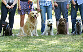 istock Group Of Dogs With Owners At Obedience Class 491765830