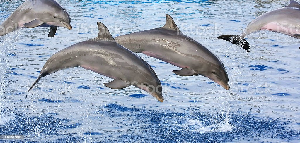 Dolphins – Foto