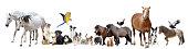 istock group of domestic animals 1028095742