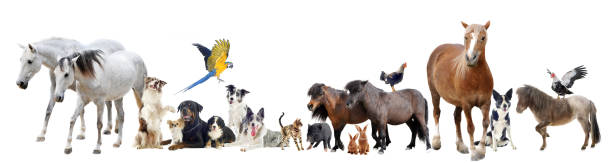 group of domestic animals group of domestic animals and pets in front of white background domestic animals stock pictures, royalty-free photos & images