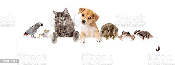 Group of domestic pets over white banner picture id503492896?b=1&k=6&m=503492896&s=612x612&h=makqtdqxqnzbqw5yn3sjkys fxlyr0s wb runr0fw8=