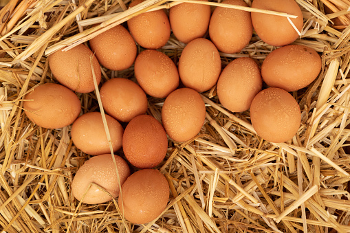 Group Of Eggs Lying On Straw Stock Photo - Download Image Now