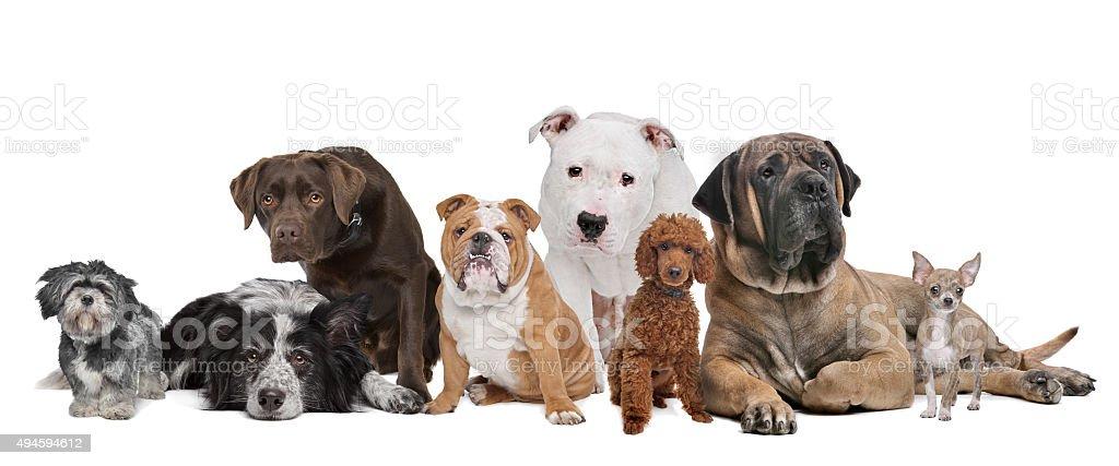 Grupo de ocho perros - foto de stock