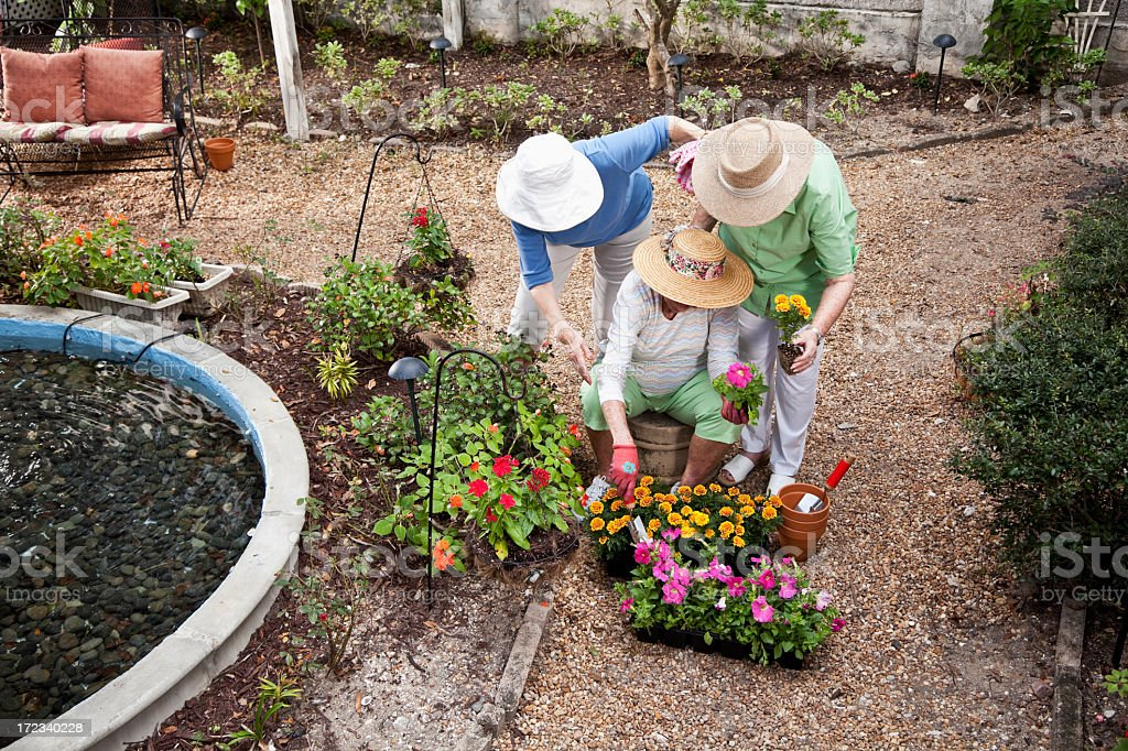 Group of elderly women gardening stock photo
