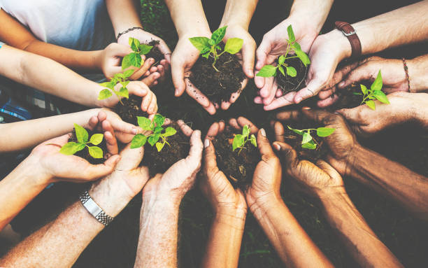 group of environmental conservation people hands planting in aerial view - responsible business stock photos and pictures
