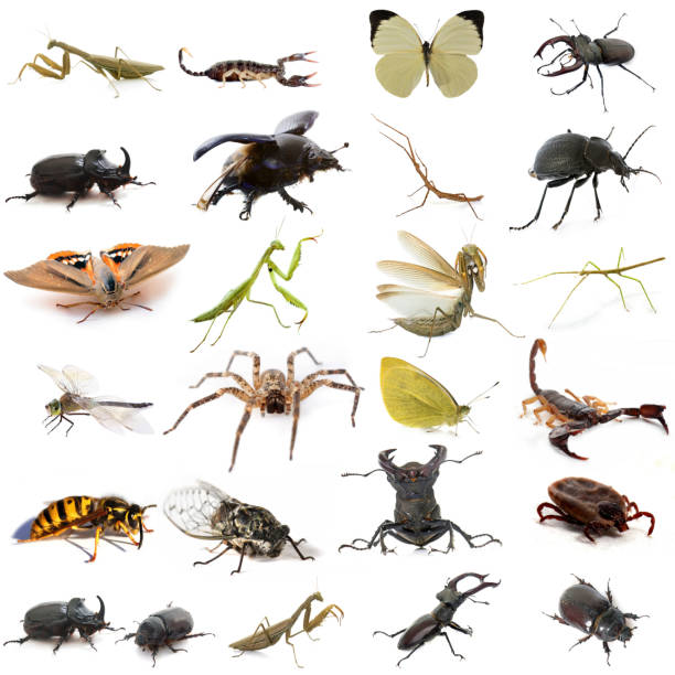 group of european insects - insect stock pictures, royalty-free photos & images