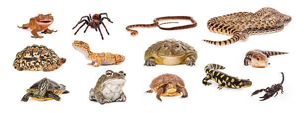 group of exotic pets - boğa hayvan stok fotoğraflar ve resimler
