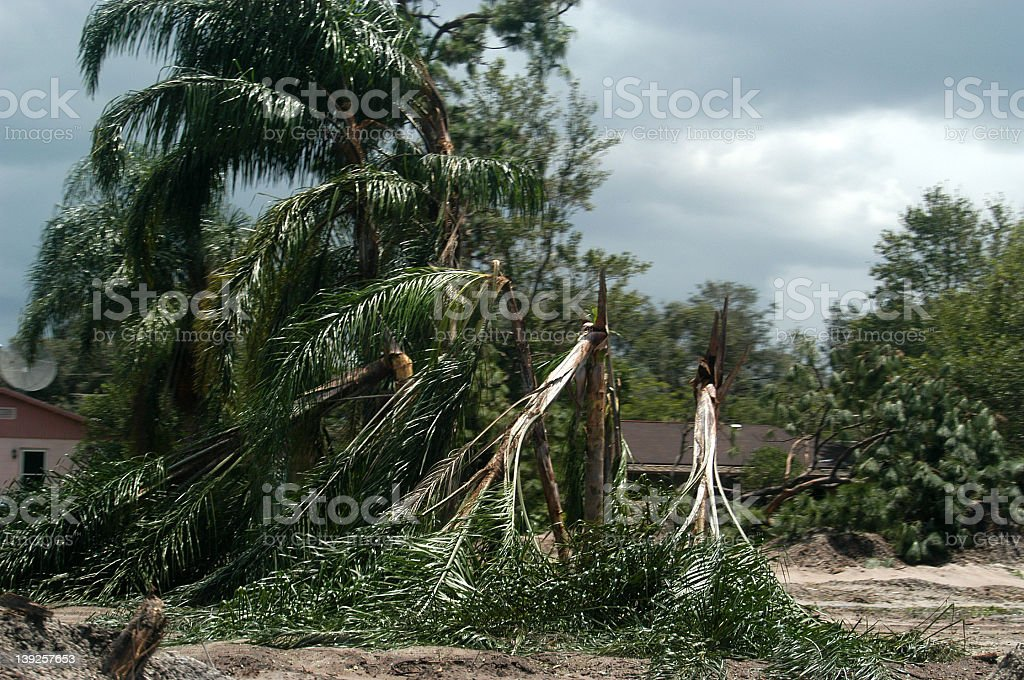 Group of falling trees due to storm stock photo